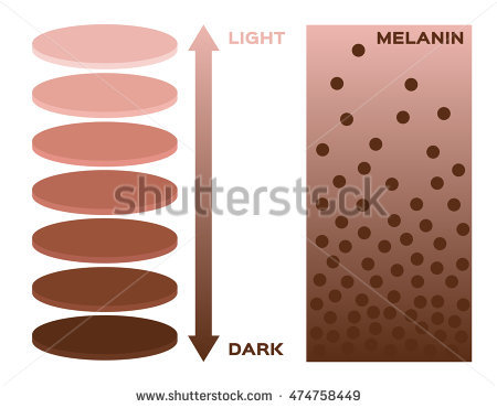 stock-vector-skin-color-and-melanin-index-infographic-vector-chart-dark-to-light-474758449