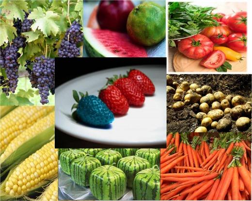 Thực phẩm biến đổi gen và những điều còn tranhcãi