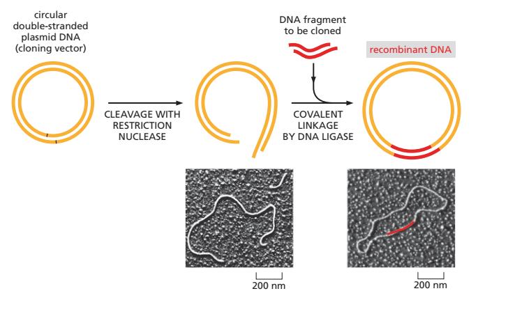 Dược phẩm sinh học và liệu pháp peptide – xu hướng mới trong điều trị nộikhoa
